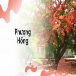 Download nhạc Mp3 Phượng Hồng - Bằng Kiều