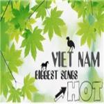 Download nhạc mới Tổng Hợp Nhạc Việt Hot 2011 chất lượng cao
