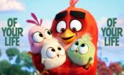 Best Day (Angry Birds 2 Remix) (Lyric Video) - Kesha   Xem video nhạc trực tuyến